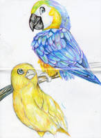Birds by The-Cat-King