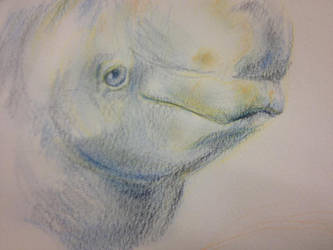Beluga Face Study by The-Cat-King