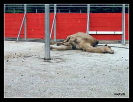 Camel et Marlboro by PsykoMarvin