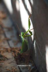 Praying Mantis by EndreArgyelan