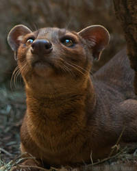 Shady Fossa by robbobert