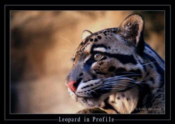 Leopard in Profile by robbobert