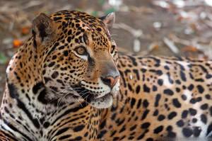 Three-Quarter Jaguar by robbobert