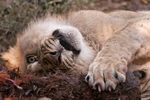 Lion Cub 0287 by robbobert