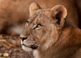 Lion Cub 9024 by robbobert