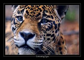 Entreating Eyes by robbobert