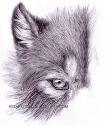 Wolf Head Fur Study by Kyonovus