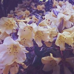 flora by fairdemon