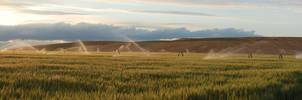 Melba Wheat Fields by eRality