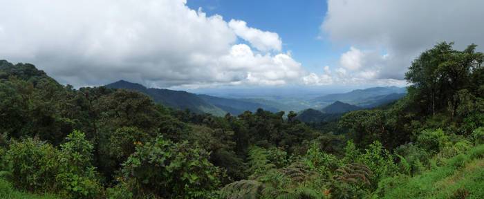 Ecuador Jungle 2013-04-21 by eRality