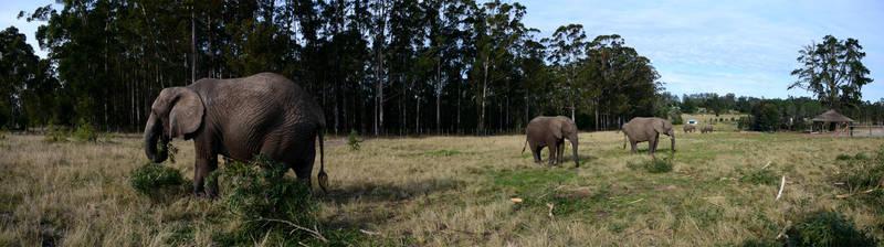 Walking Amidst Elephants by eRality