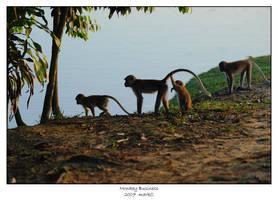 Monkey Business by markeatworld