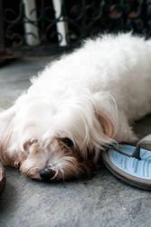 doggy doggy by markeatworld