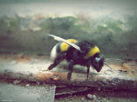 Bee mine by ItsJustAboutColors