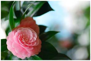 Otome Camellia 3 by simzcom