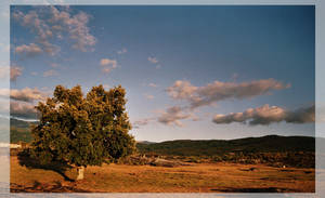 Quercus by enochmm