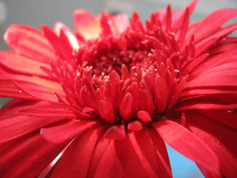 Red Flower Stock by Cinnamoncandy-Stock