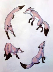 Fox cycle by Gamibrii
