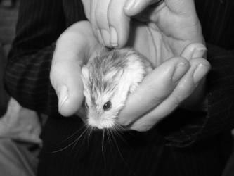 Hamster by men8rnb