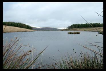 Pond by men8rnb