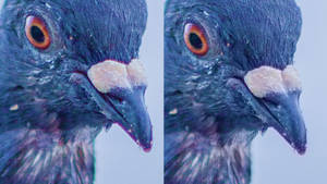 How to Manually Remove Chromatic Aberration by JSWoodhams