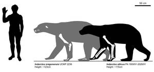 Body size in Indarctos spp. by bLAZZE92