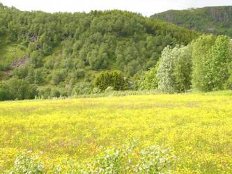 meadow 4 by VaybsStocks