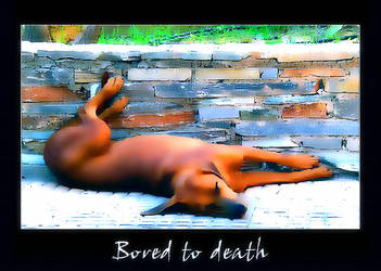 Bored to death by sogear