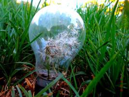 Dandelion Idea by Caen-N