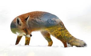 Fox by Caen-N
