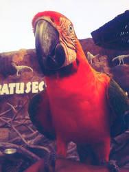 Speechless Parrot by amririzqi