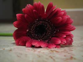 Flower by LadyEloise
