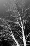 The Shape of a Winter Tree by jpapasso