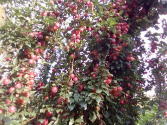 Cherry plum by free-gamer4ever