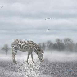 Lost Zebra by My-Lil-Sempatico
