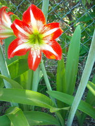 Flower Burst by Ladyofevilness