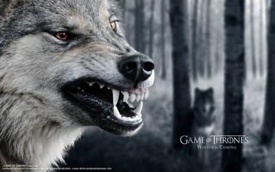 Wolf Stark Game of Thrones by belief2