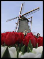 Holland by jazzyfrizzle9