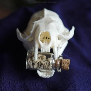 Mink teeth by DelinquentDog