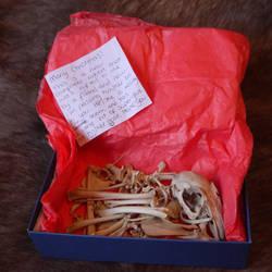 Surprise present! by DelinquentDog