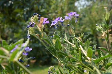 Purple flowers by cythia-duval