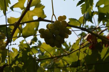 Grapes by cythia-duval