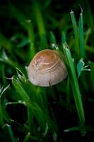 Mushroom02 by paconavarro
