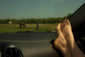Distracted Driving by nikongriffin
