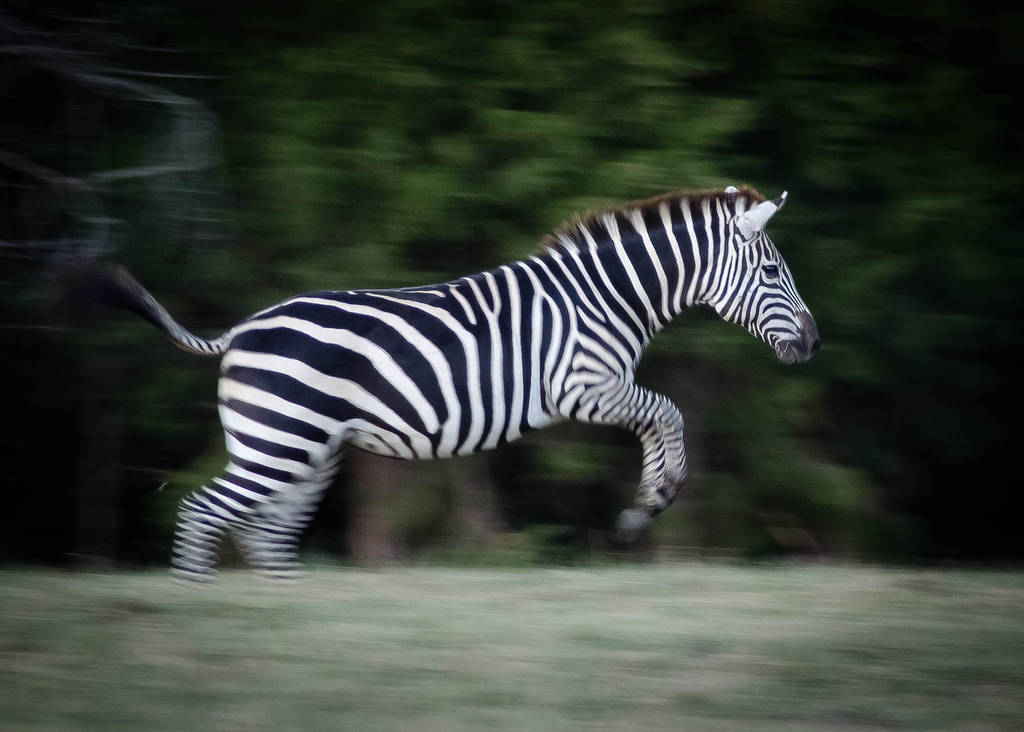 Flying Stripes by nikongriffin