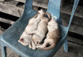 Sleepyheads by Tikrekins
