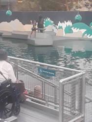 Sea Lion Show by pyrus125680
