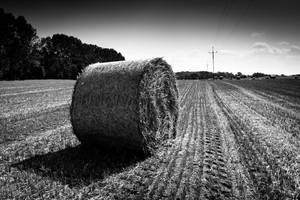 haystack by ZLysy