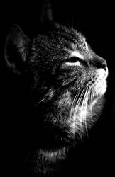 Dark Cat by ivekvatrozic