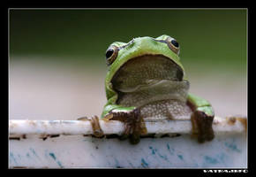 Froggy by ivekvatrozic